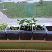 Vzgoja sadik